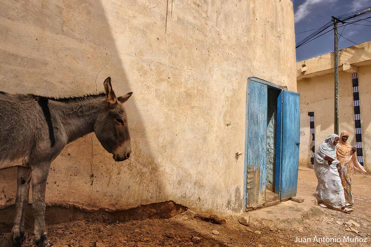 Burro en Mauritania