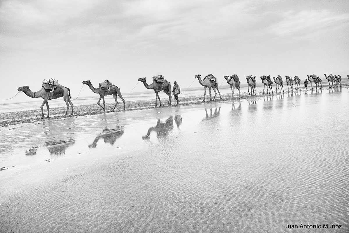 Caravana Afar Etiopía