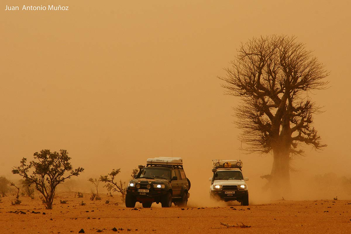 Tormenta entre baobas