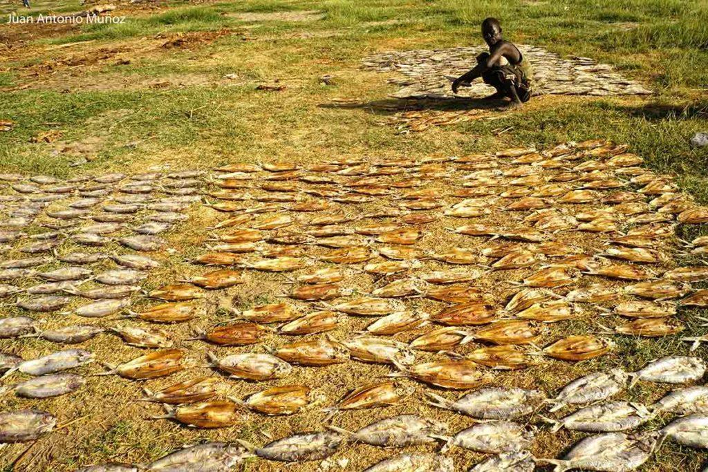 Secando pescado Kenia