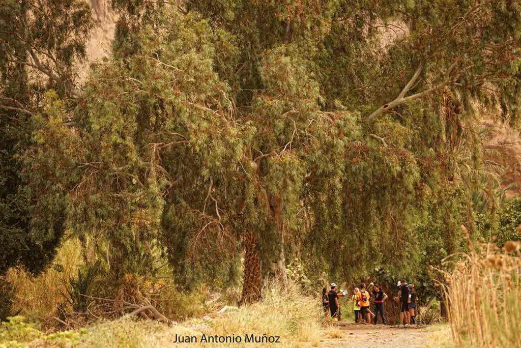 Punto de paso en las selva del Draa Marruecos