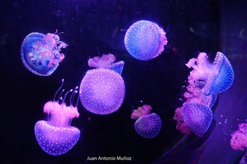 Medusas zoo Madrid