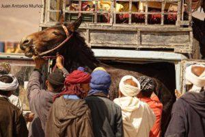 Cargando la mula Marruecos