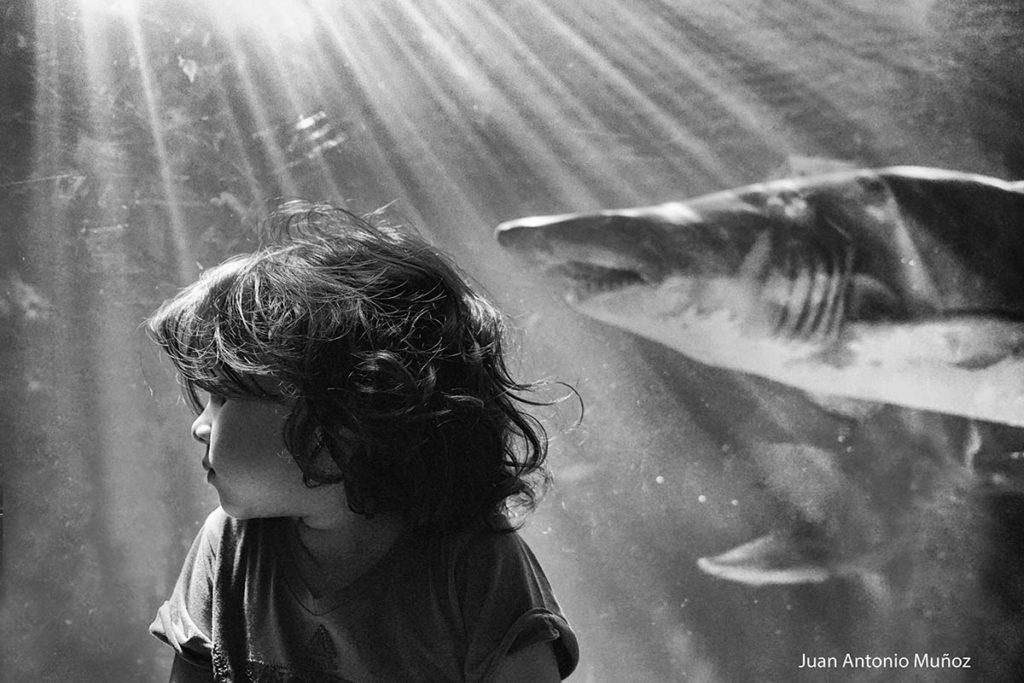 Sara y el tiburón