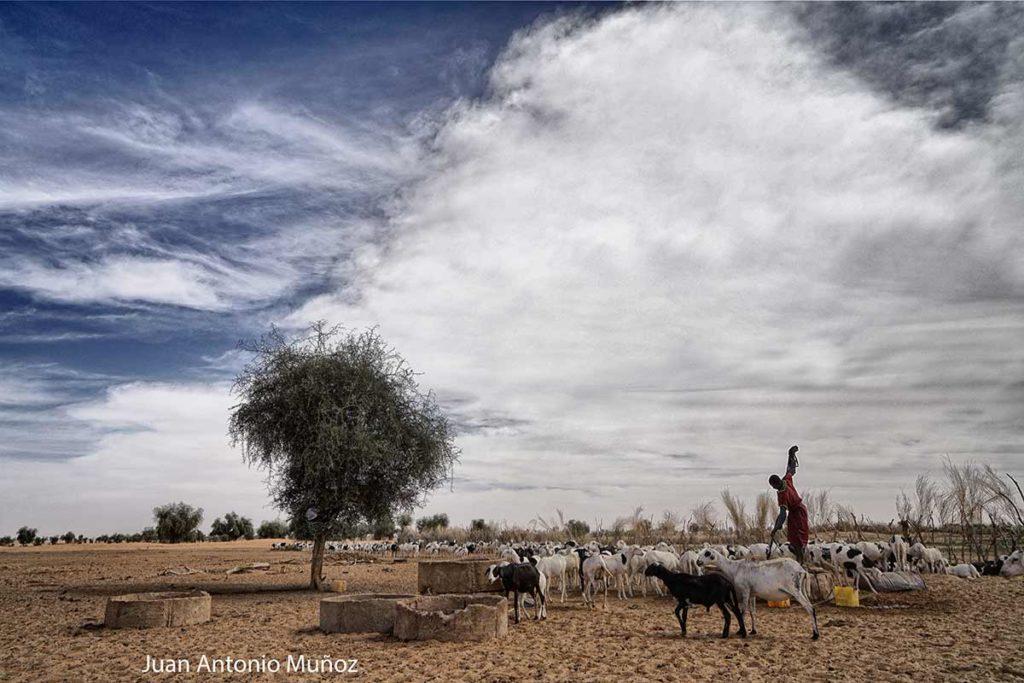 Pozo del sahel. Mauritania