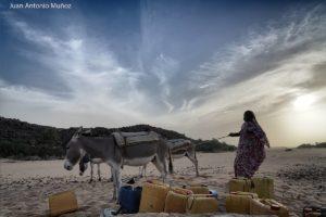 Burros en el pozo. Mauritania