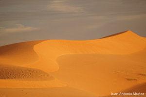 Dunas en Boutilimit. Mauritania