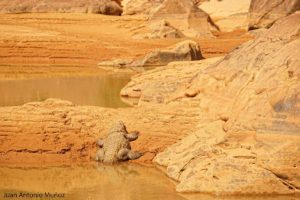 Cocodrilo al sol. Mauritania
