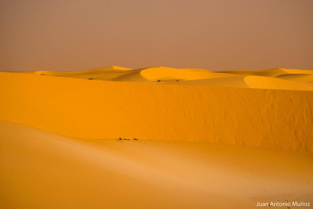 Croma del desierto. Mauritania