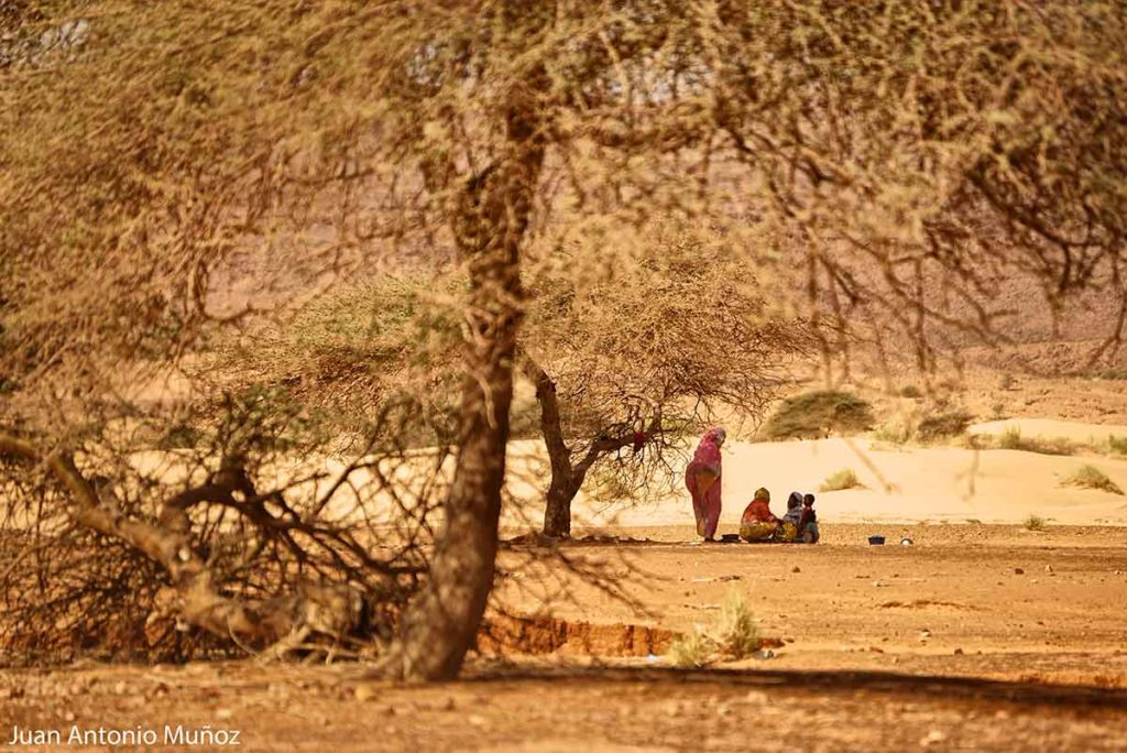 Charla bajo las acacias. Mauritania