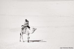 Camello en la inmensidad. Mauritania