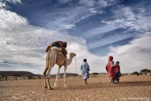 Camellero en Adrar. Mauritania