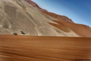Árbol entre dunas. Namibia