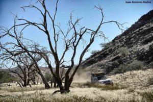 Coche en bosque. Namibia