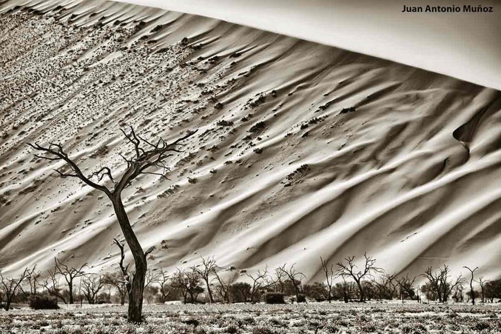 Escultura arbórea. Namibia