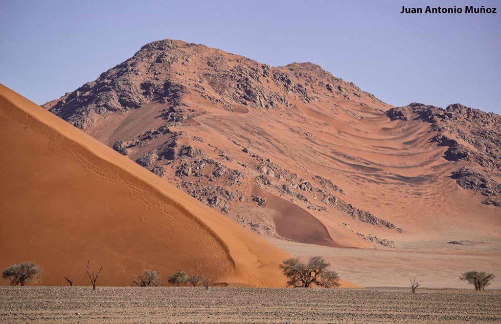 Árbol en duna 45. Namibia