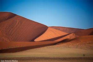 Dunas y árbol. Namibia