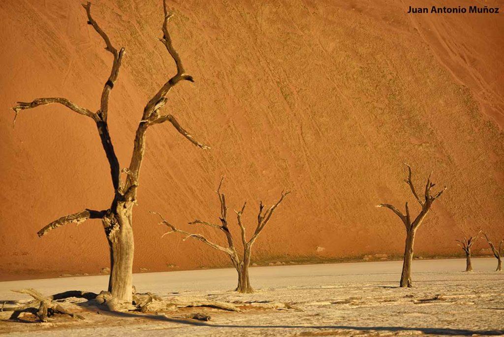 Esqueletos petrificados. Namibia
