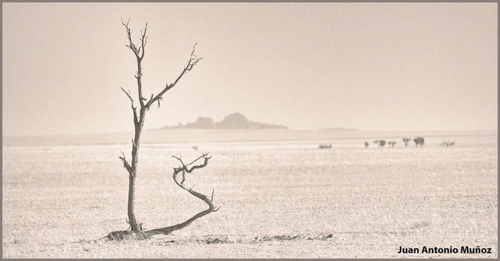 Árbol solitario. Namibia