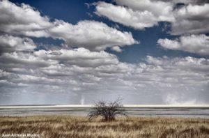 Etosha plain. Namibia