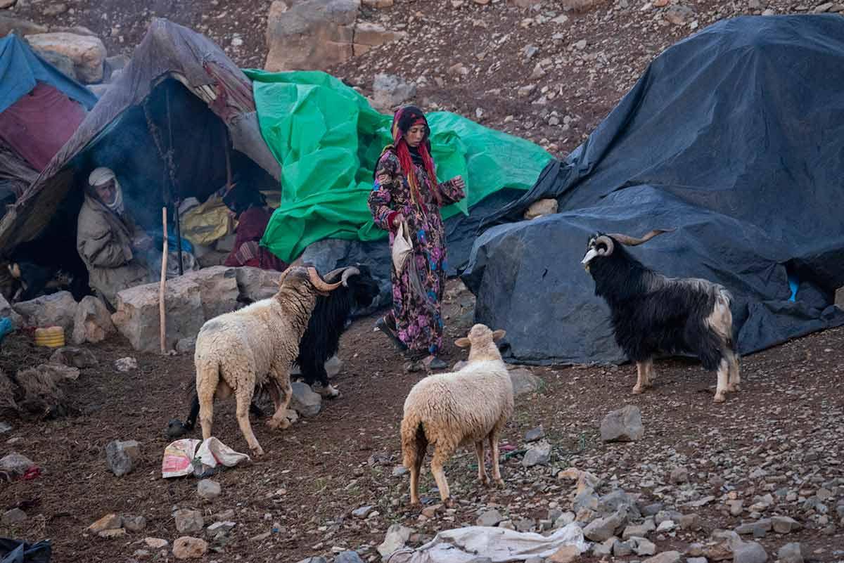 Los corderos y el nómada. Marruecos