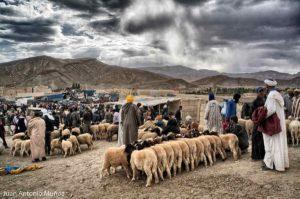 Mercado de ovejas. Marruecos