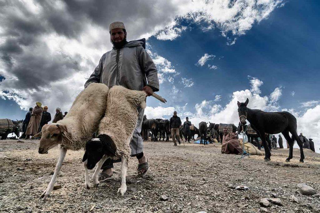 Llevando las ovejas. Marruecos
