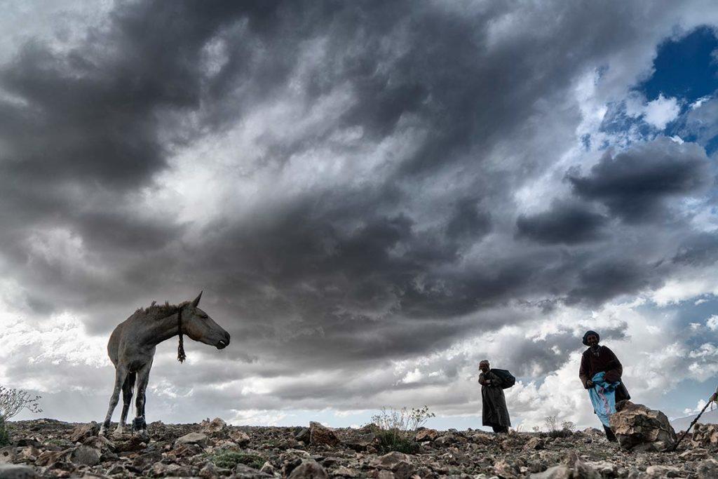 Caballo mirando a nómada. Marruecos
