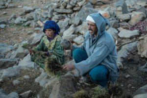 Hierba para el camello. Marruecos
