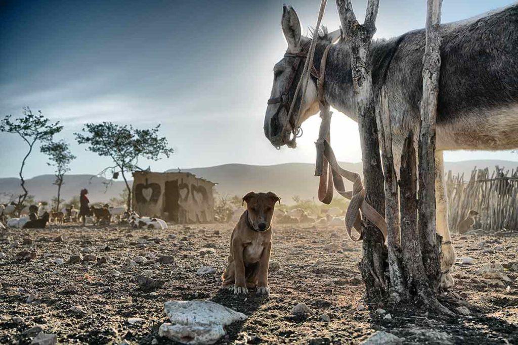 Burro y perro. Namibia