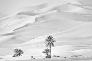 Palmeras y dunas. Marruecos