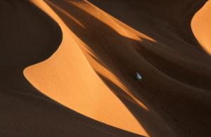 Perro en dunas. Marruecos