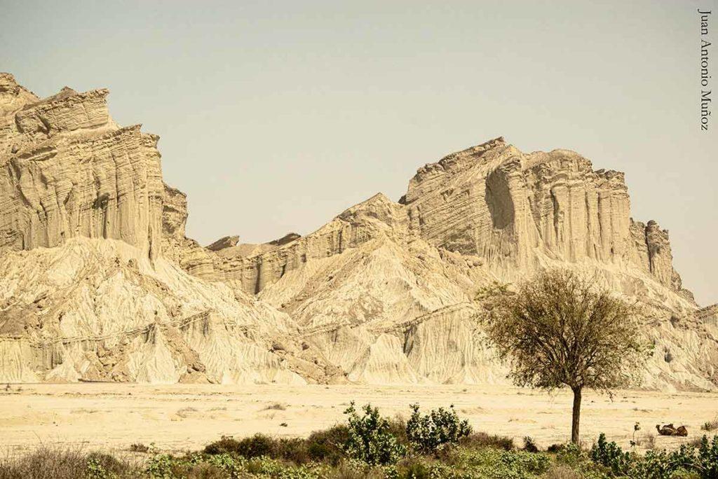 Camellos en desierto. Irán