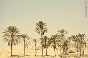 Palmeras desierto Irán