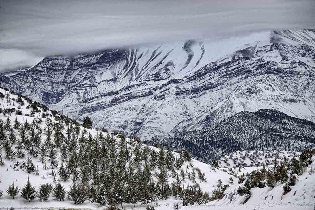 Pinos y nieve Atlas. Marruecos