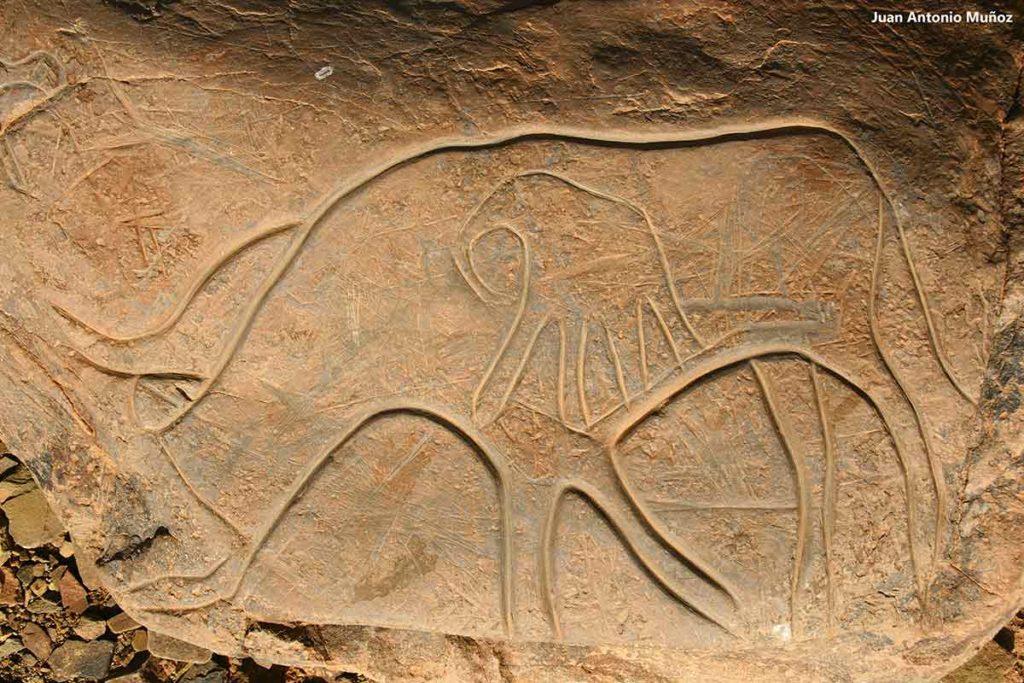 Grabado rupestre. Marruecos