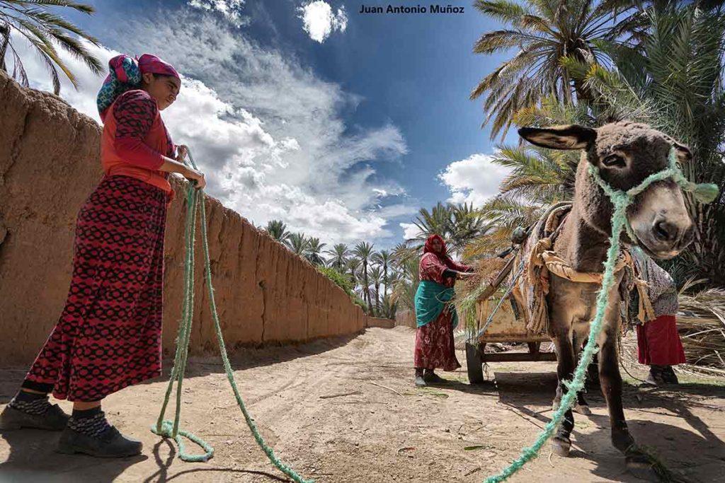 Cargando carro en Hara. Marruecos