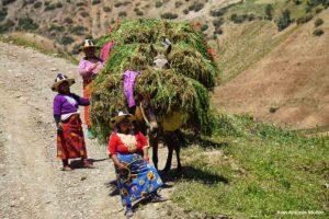 Mulas cargadas. Rif. Marruecos