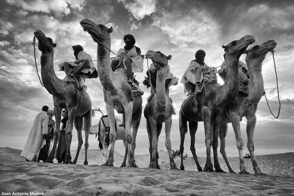 Grupo de camelleros montados. Marruecos