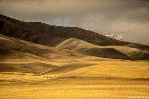 Luces, sombras, caballos. Mongolia