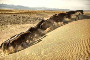Caballos dunas. Mongolia