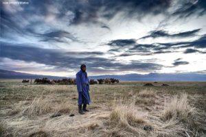 Camellero y paja. Mongolia