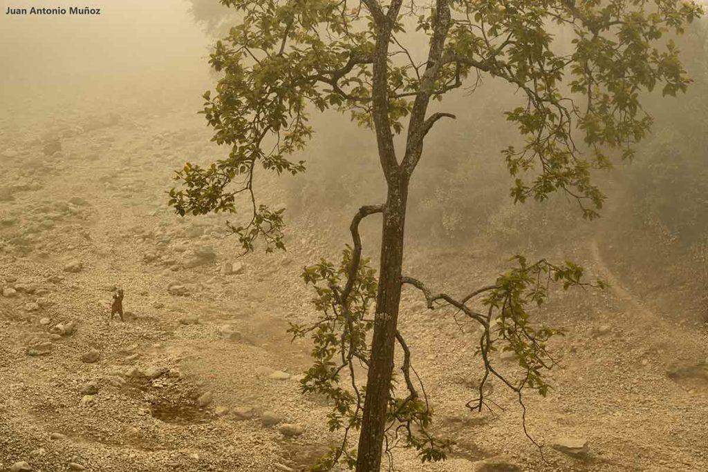 Bosque en niebla. Nepal