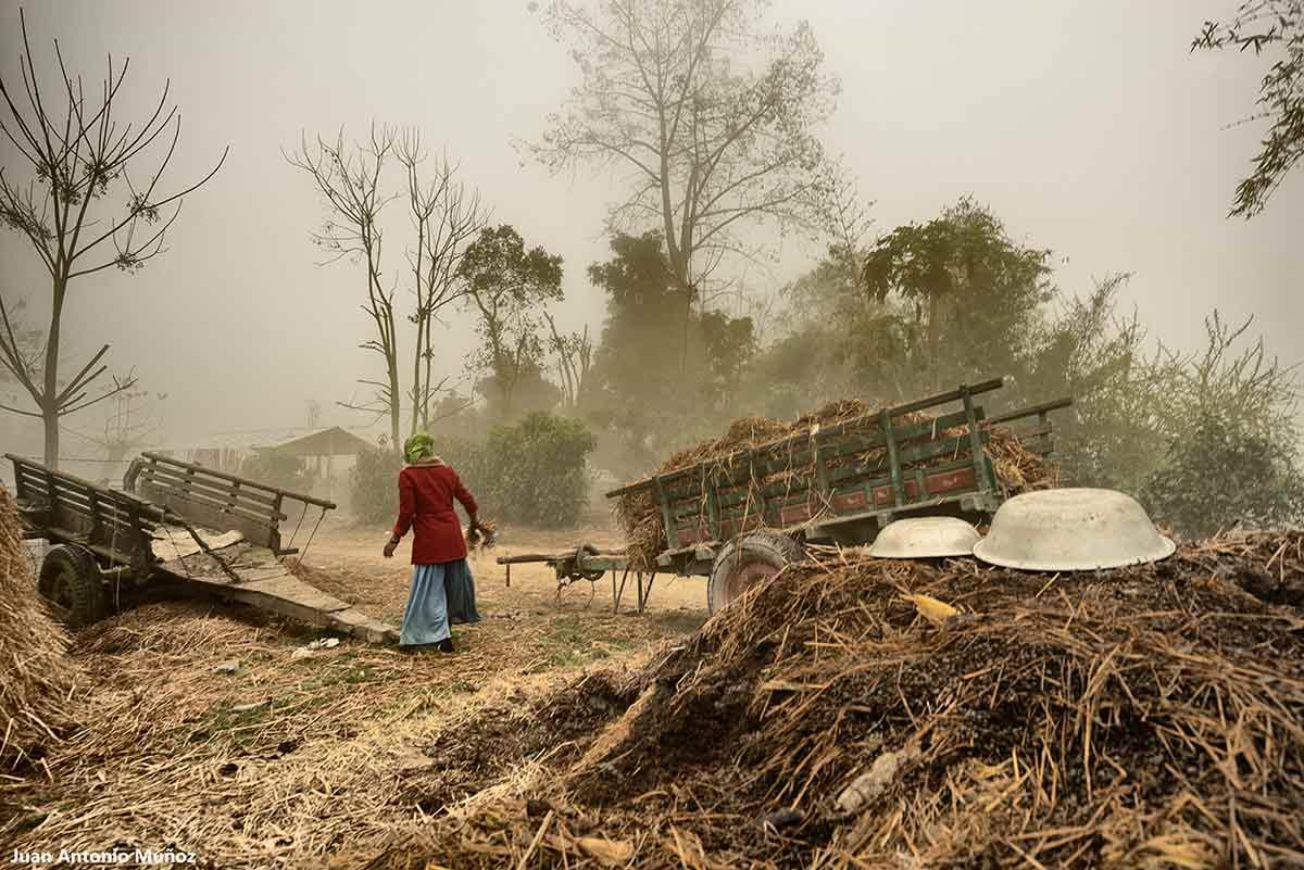 Carromatos en niebla. Nepal