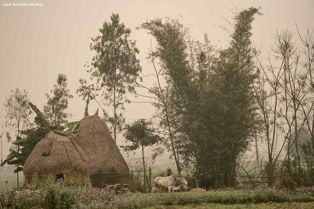 Cabaña en niebla. Nepal
