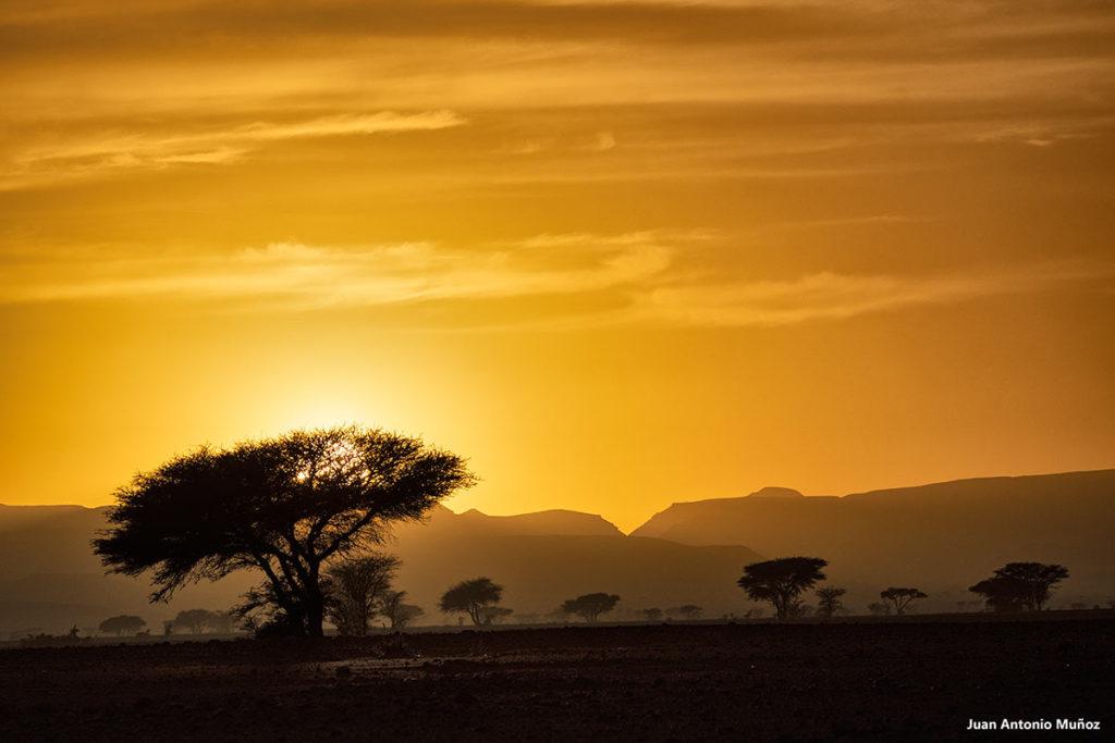 Atardecer acacias. Marruecos
