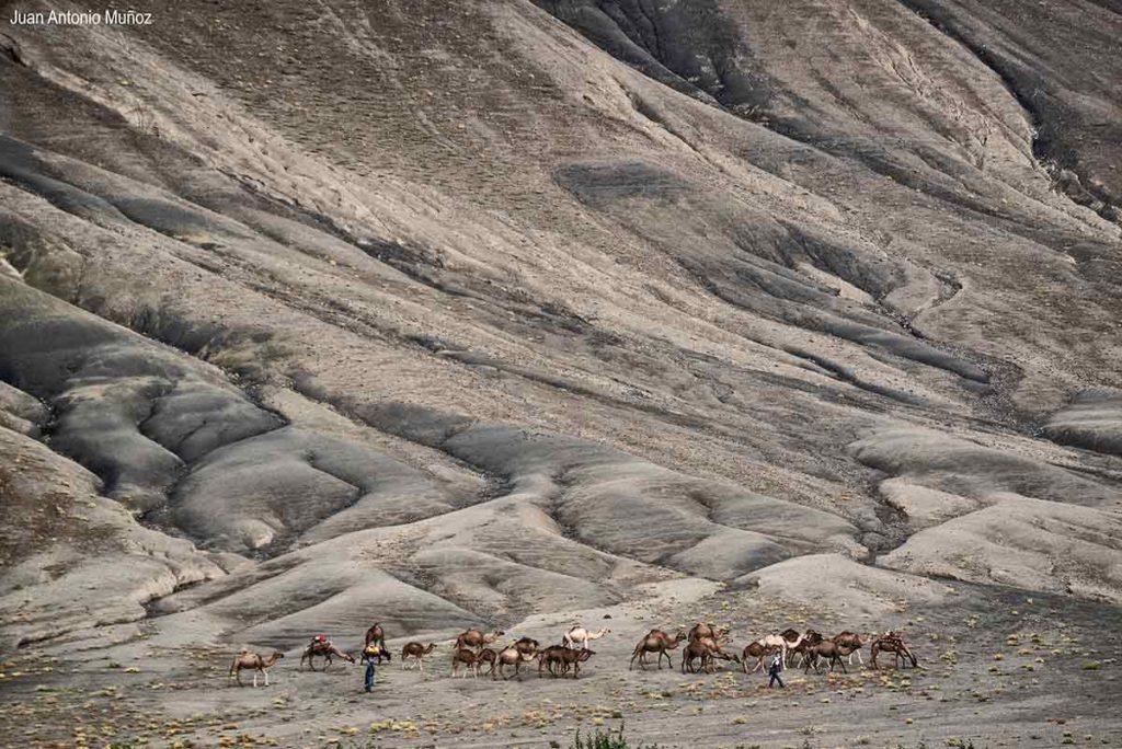 Caravana camellos. Atlas. Marruecos