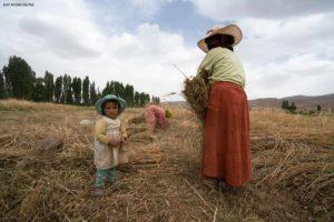 Mujer sembrando. Marruecos