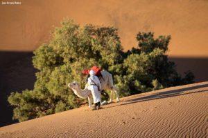 Levantando al camello. Marruecos