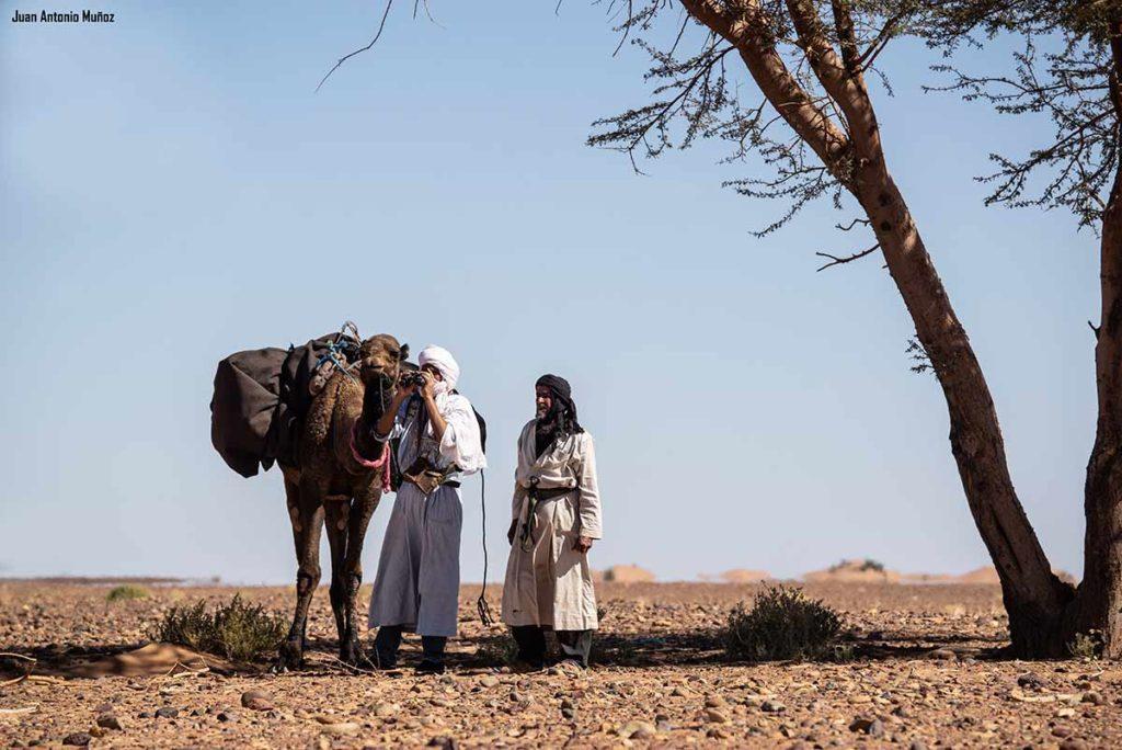 Oteando desde la acacia. Marruecos